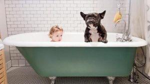 dogs-smell-even-after-having-bath_8e0f5dfc41ff75d3